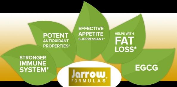 Benefits ofJarrow Formulas Green TeaExtract