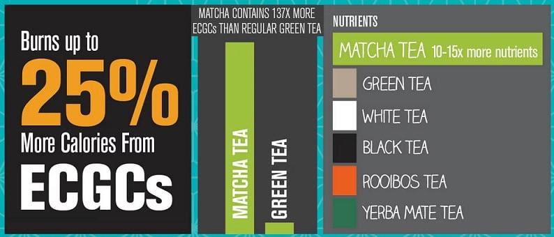 Matcha vs Green Tea Antioxidants
