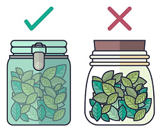 Right way of storing green tea